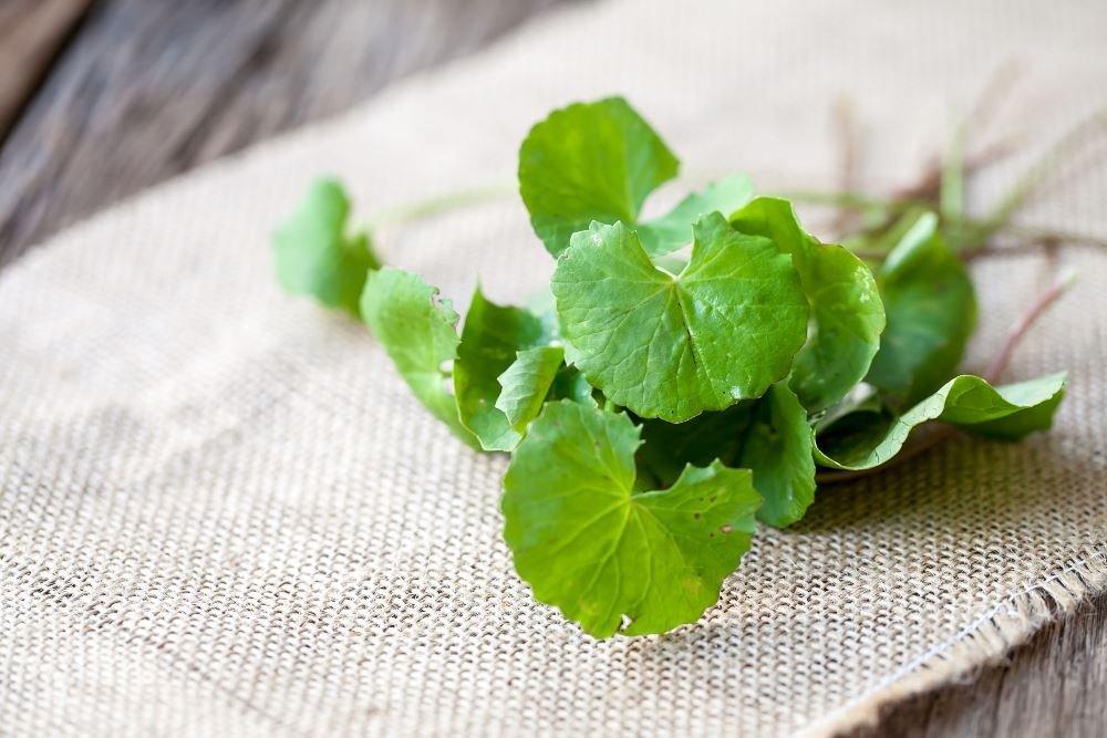 Mặt nạ trà xanh và bột rau má dưỡng da hiệu quả
